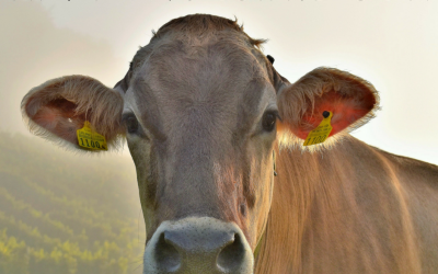 Why I'm A Positive Cow