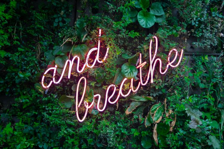 'And breathe' read neon lights hanging in a dense bush