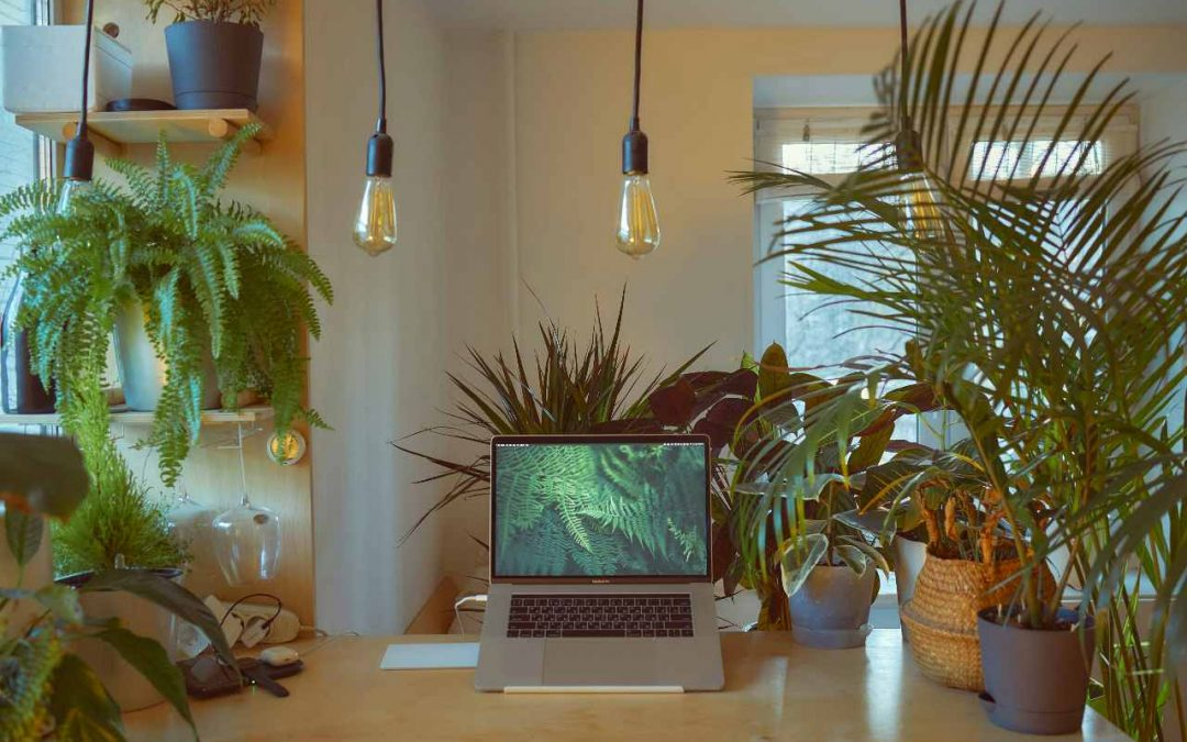 Can working from home help the eco-revolution?